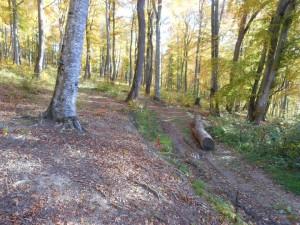 Padurea Sugas Trail Running